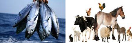 fishing and livestock