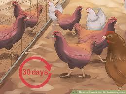keep flocks away
