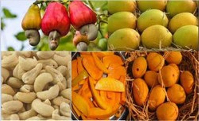 cashew and mangoes