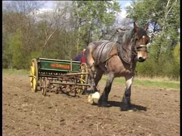 horse in agriculture
