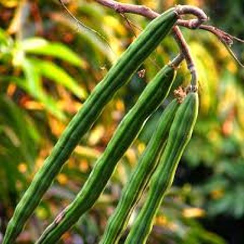 planting morings