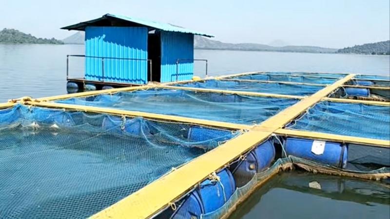Cage Culture Fish Farming