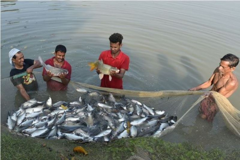 Fisheries Farming
