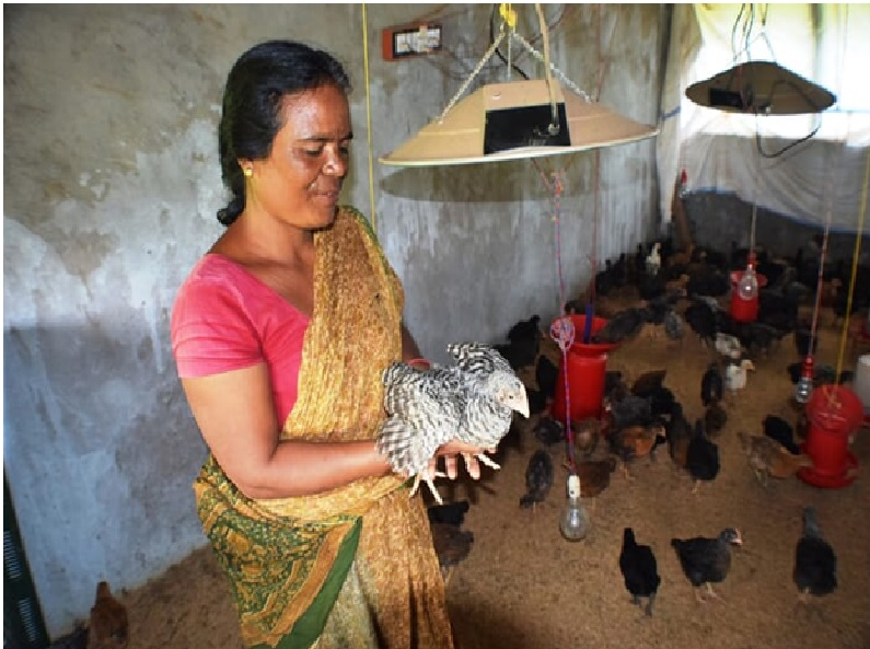 Poultry farming by Women