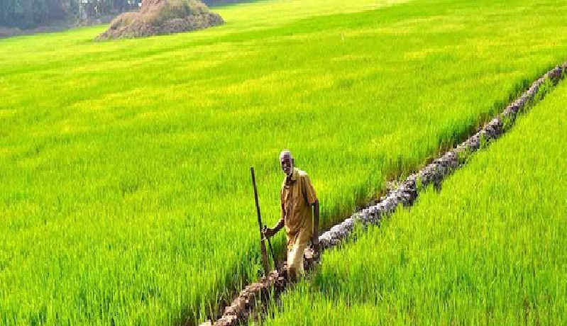 Rayalseema Agriculture