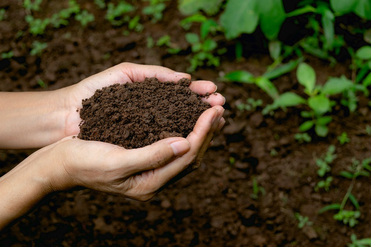 Soil for Crop